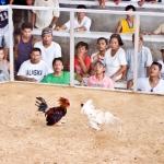 Cockfighting ring near Tabinay Munti